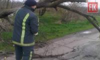 На Кіровоградщині рятувальники прибрали 2 дерева,  які впали на дорогу