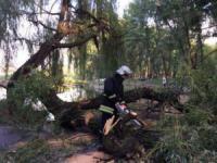 У Кропивницькому дерево впало на проїжджу частину дороги