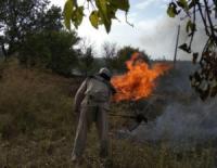 На Кіровоградщині ліквідували 6 пожеж сухої трави та сміття