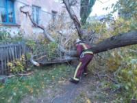На Кіровоградщині дерево впало на двоповерховий житловий будинок