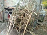 На Кіровоградщині у чоловіка виявили коноплю та пристрої для вживання наркотичних речовин