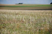 Аграрные расписки помогут житомирским сельхозпроизводителям успешно работать