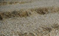 Сельхозпроизводители Одесчины смогут с этого года кредитоваться по аграрным распискам