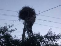 На Кіровоградщині рятувальники повернули у гніздо лелеченя,  яке випало