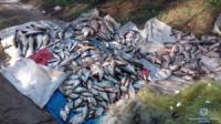 На Кіровоградщині вилучено понад 3, 4 тонн незаконно виловленої риби