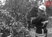 У Кропивницькому рятувальники розпиляли та прибрали 3 аварійні дерева