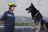 Кіровоградська область: кінологічний розрахунок рятувальників продемонстрував високий рівень підготовки