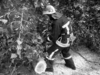 На Кіровоградщині рятувальники двічі залучались до розпилювання та прибирання аварійних дерев