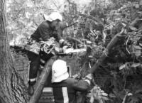 На Кіровоградщині рятувальники двічі залучались для надання допомоги по розпилюванню гілок дерев