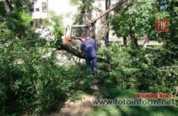 На Кіровоградщині у центральному парку смт Голованівська впало дерево