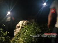 На Кіровоградщині СБУ виявила плантацію коноплі на суму понад три з половиною мільйони гривень