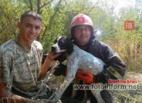 Кіровоградський район: рятувальники витягли з погребу собаку