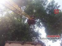 У Кропивницькому рятувальники надали допомогу по розпилюванню й прибиранню аварійної гілки