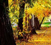 У Кропивницькому осінь: чарівні вулиці міста