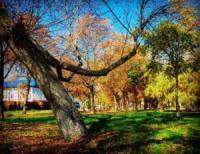 У Кропивницькому осінь: догорають дерева,  як свічки