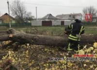 На Кіровоградщині рятувальники залучались до розпилювання та прибирання аварійних дерев
