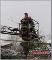 У Кропивницькому рятувальники надали допомогу по прибиранню аварійного дерева