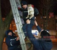 У Кропивницькому рятувальники зняли кота з дерева
