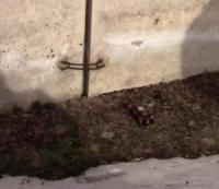 На Кіровоградщині була здійснена спроба умовного мінування паливно-мастильного сховища