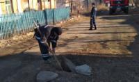 На Кіровоградщині рятувальники витягли собаку та двох котів із глибоких ям