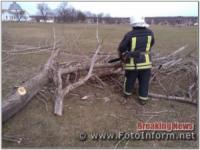 На Кіровоградщині розпиляли та прибрали аварійні дерева