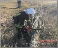На Кіровоградщині тричі надавали допомогу по прибиранню аварійних дерев