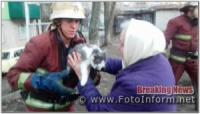 На Кіровоградщині бійці ДСНС допомогли врятувати двох котів