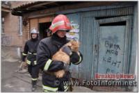 У Кропивницькому завершилась рятувальна операція по визволенню кота з пастки