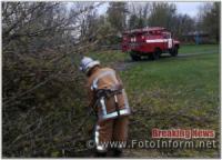 Кіровоградщина: на території стадіону впало дерево