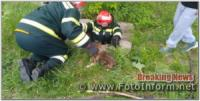На Кіровоградщині рятувальники дістали собаку з каналізаційного колодязя