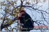 На Кіровоградщині вогнеборці зняли домашнього улюбленця з небезпечної висоти