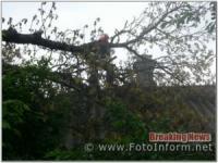 У Кропивницькому на дах житлового будинку впало дерево