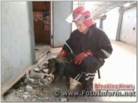 За добу рятувальники Кіровоградщини надали допомогу двом собакам