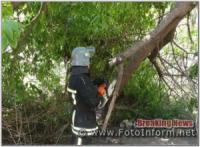 У Кропивницькому рятувальники прибрали аварійну гілку дерева