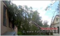 На Кіровоградщині рятувальники усунули небезпеку від двох аварійних дерев