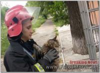У Кропивницькому рятувальники визволили кота та собаку із безвиході