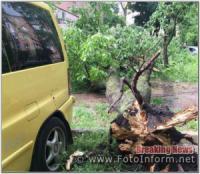 У Кропивницькому дерево ледь не впало на автомобіль