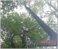 На Кіровоградщині рятувальники спиляли аварійну гілку дерева