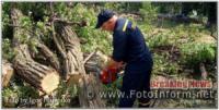 На Кіровоградщині рятувальники усунули загрозу від двох аварійних дерев