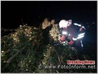 На Кіровоградщині рятувальники надавали допомогу по спилюванню аварійних дерев