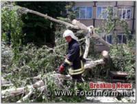 На Кіровоградщині рятувальники усунули загрозу від аварійних дерев