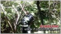 На Кіровоградщині аварійні дерева становили загрозу