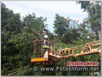 На Кіровоградщині дерево впало на покрівлю житлового будинку