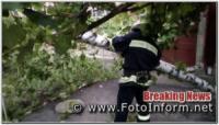 На Кіровоградщині дерево впало на дорогу.