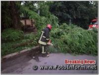 У Кропивницькому після грози з`явилося багато аварійних дерев