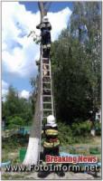 У Кропивницькому продовжують спилювати аварійні дерева