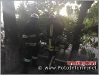 На Кіровоградщині аварійне дерево загрожувало падінням