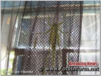 Нашествие саранчи в Кропивницком