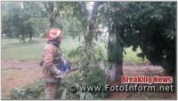 На Кіровоградщині після негоди прибирали аварійні дерева