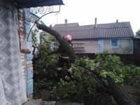 На Кіровоградщині продовжують прибирати аварійні дерева